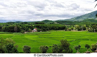 Beautiful green rice fields under the cloudy sky in Vietnam.