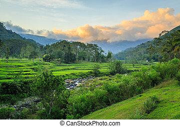 Beautiful green rice terraces at sunset