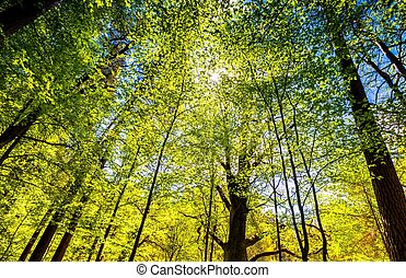 Beautiful green springtime forest