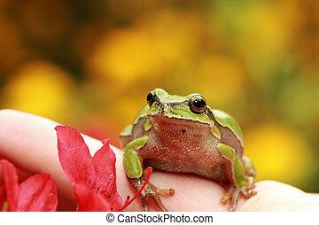 beautiful green tree frog on human hand