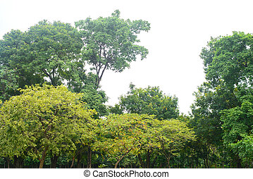 Beautiful green tree on a white background in high definition