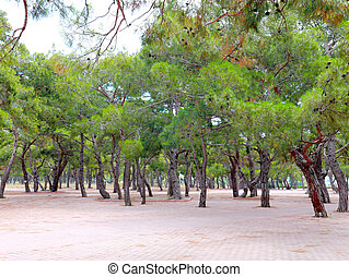 beautiful green trees and pavement park recreation area