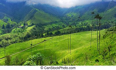 Beautiful Green Valley - Beautiful green valley and wax palm...