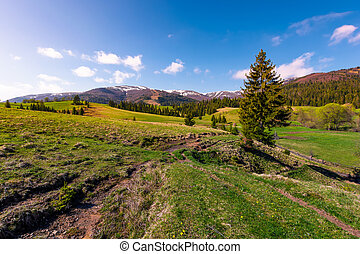beautiful green valley in springtime. spruce forest on...