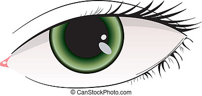 Beautiful green woman eye