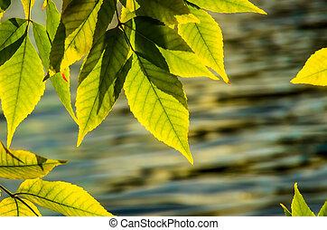 Beautiful green yellow leaves in autumn
