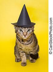 Beautiful grey kitten in a black  hat