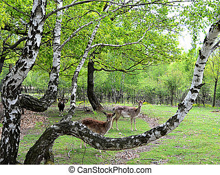 Beautiful group of deers and a ram