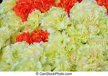 Beautiful group of pink carnations flowers