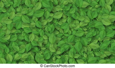 Beautiful Growing Green Leaves Covering the Screen. Growing...