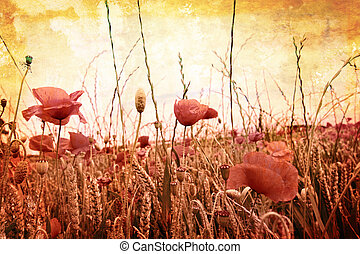 Beautiful grungy background with poppies