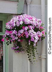 Beautiful hanging basket in a Dartmouth street