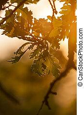 Beautiful, harmonious oak forest detail with sunset light