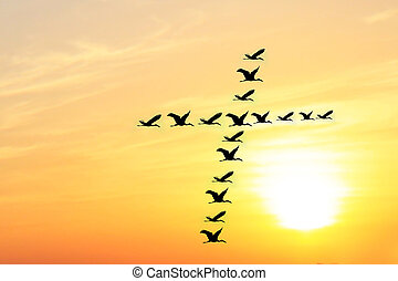Beautiful & heavenly sky in the evening with birds forming holy cross shape as they fly together in unison & harmony. The evening sky is brightly lit by the setting sun