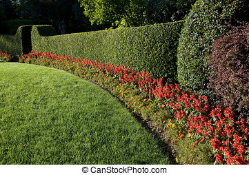 beautiful hedge - beautiful lawn and hedge, trimmed with...