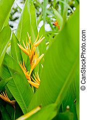 beautiful Heliconia flower closeup in garden