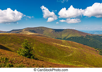 beautiful hilly landscape of Carpathian mountains. lovely...