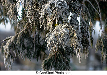 Beautiful hoarfrost on a tree