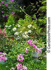 Beautiful home garden in Summer