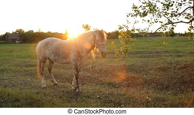 beautiful horse and sun
