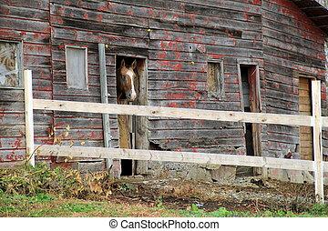 Beautiful horse at barn door