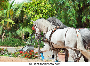 beautiful horse-drawn in Andalusia,  Spain