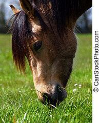 Beautiful Horse feeding in the English countryside