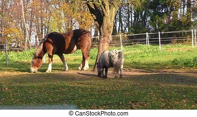 Beautiful horse grazing in a corral