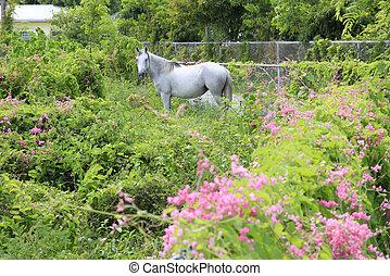 Beautiful Horse in a field