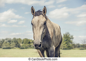 Beautiful horse in field with cloudy sky.