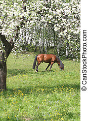 Beautiful horse in the grass field
