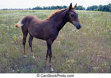 beautiful horse in the grass on a green meadow