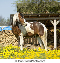 beautiful horse on a meadow