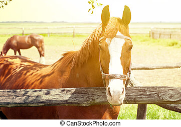 Beautiful horse on farm