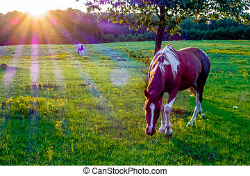 Beautiful horse on the pasture at sunset in south carolina ...