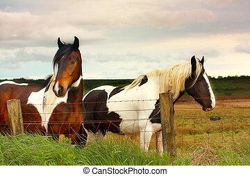 Beautiful horses close up