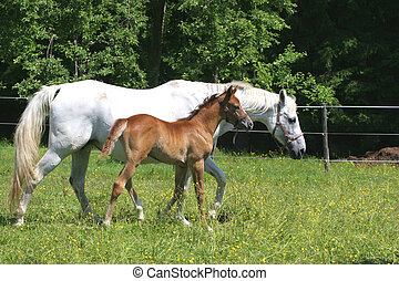 Beautiful horses in the grass field