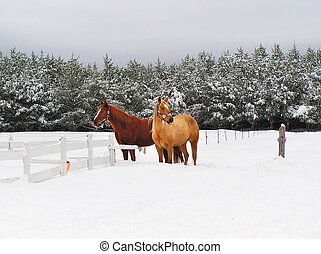 Beautiful horses in the snow - Beautiful tranquil rural...