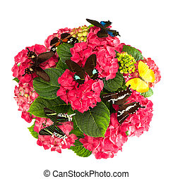beautiful hortensia flowers with colorful butterflies