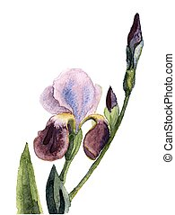 Hand Painted flower - beautiful illustration of Hand Painted...
