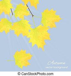 autumn leaves against the sky