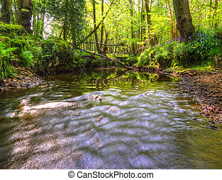Beautiful image from very low point of view along stream flowing upstream with deep vibrant lush foliage on either bank and sunlight brightening up background