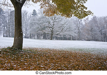 Beautiful image of Autumn Fall color tree and leaves on ground with snow covered ground and trees in background giving impression of seasonal change in one image