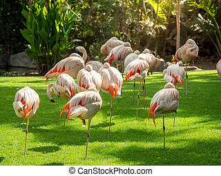 Beautiful photo of pink flaming birds flock on grass meadow at Loro Parque zoo, Tenerife island