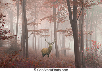 Beautiful image of red deer stag in foggy Autumn colorful...