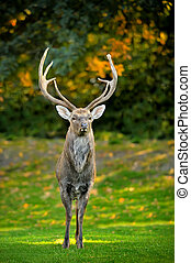 Beautiful image of red deer