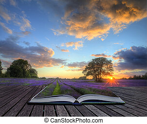 Beautiful image of stunning sunset with atmospheric clouds and sky over vibrant ripe lavender fields in English countryside landscape coming out of pages in magic book, creative concept image