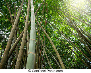 Beautiful image of sun shining through dense bamboo forest at tropical island