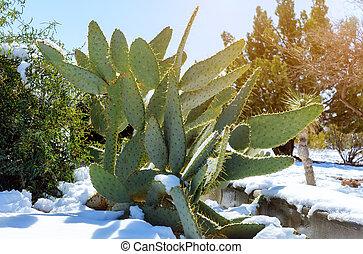 Arizona desert snow storm weather in cactus covered in snow.