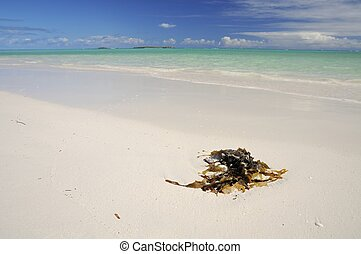 Beautiful Indian Ocean